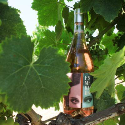organic wines 1