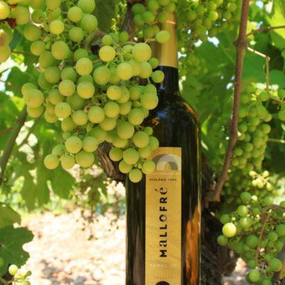 organic wines 2