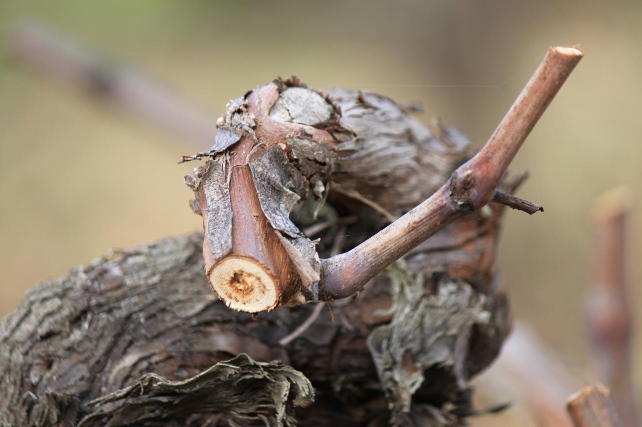 organic wines 4