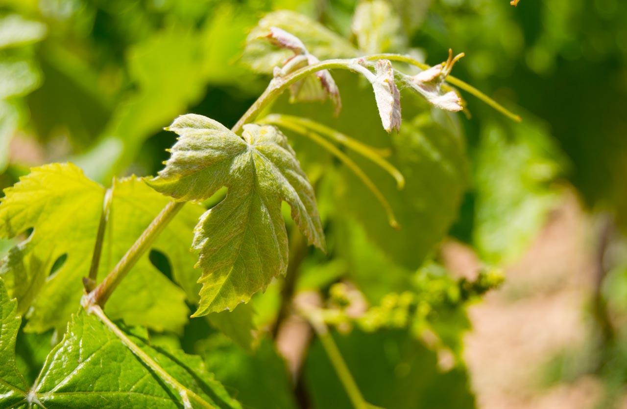 organic wines 5